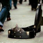 Opbevaring af guitar